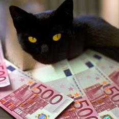 Brodjachij kot poluchil nasledstvo v 10 millionov evro