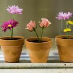 Цветок в горшке – волшебный подарок