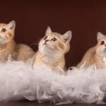 Как выгодно продать котят