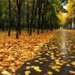 Осени и весны в России скоро не будет