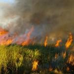 Амурские пожары: объявлена чрезвычайная ситуация в Мазановском, Селемджинском, Зейском, Свободненско...