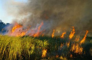 Амурские пожары: объявлена чрезвычайная ситуация в Мазановском, Селемджинском, Зейском, Свободненском и Архаринском районах