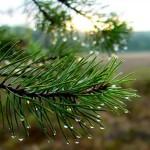 В отделении лесного хозяйства исчезли документы о границах леса в Подмосковье