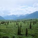 Арктика продолжает зарастать лесами. Глобальная экосистема Земли.