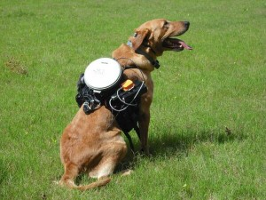 Разработана дистанционная система для управления собаками