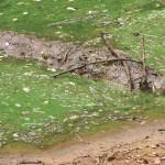 Крокодилы применяют ловушки для ловли птиц