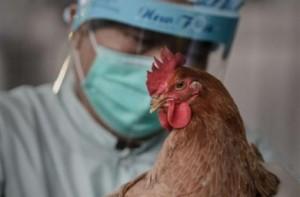 В Китае от птичьего гриппа скончалось 2 человека