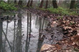 В Китае провинции Хубей в реке течет черная вода